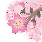桜(イラスト)